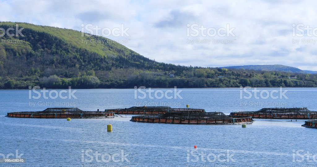 View of Salmon Farm in the Bay of Fundy, Canada royalty-free stock photo