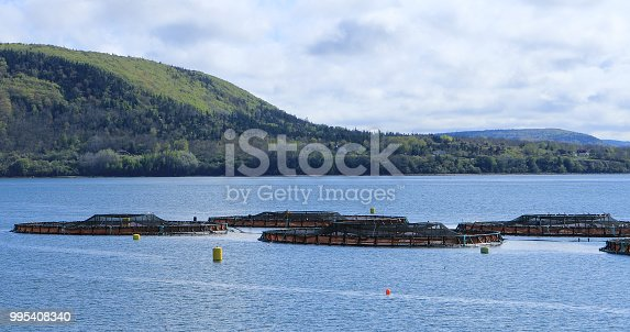 A View of Salmon Farm in the Bay of Fundy, Canada