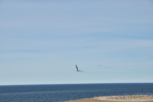 view of seagull flying in freedom with blue sky background
