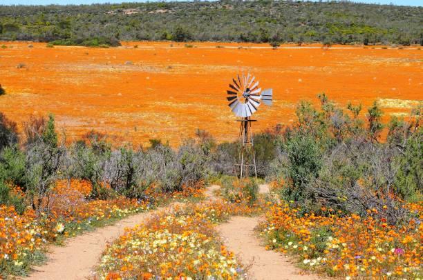 Blick auf Skilpad im Namaqua Nationalpark – Foto