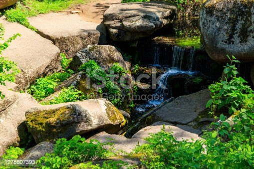 View of small stream in a green forest