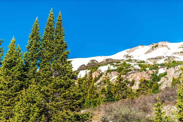 2019 yazında aspen, colorado yakınlarındaki kayalık dağlarda bağımsızlık geçidi'ndeki linkins gölü patikasında kar dağları ve çam ağaçlarının manzarası - independence day stok fotoğraflar ve resimler