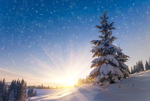 blick auf schneebedeckte conifer bäumen und schneeflocken in den sonnenaufgang. - schneeflocke sonnenaufgang stock-fotos und bilder