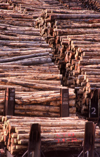 View of stacks of tree logs stacked ready for loading on ships stock photo