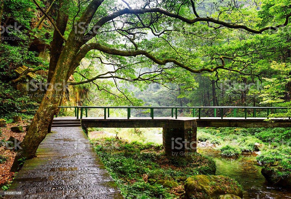 view of stone walkway and bridge over river among woods stock photo