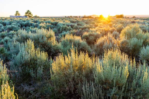 Vista do sol do por do sol através das plantas verdes da escova do sábio da grama no vale de ranchos de Taos e na paisagem verde no verão com luz solar - foto de acervo