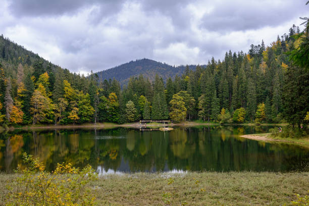 view of synevir high-altitude lake by autumn day. the leaf fall forest is reflected in water of lake. - lakeshore stock photos and pictures