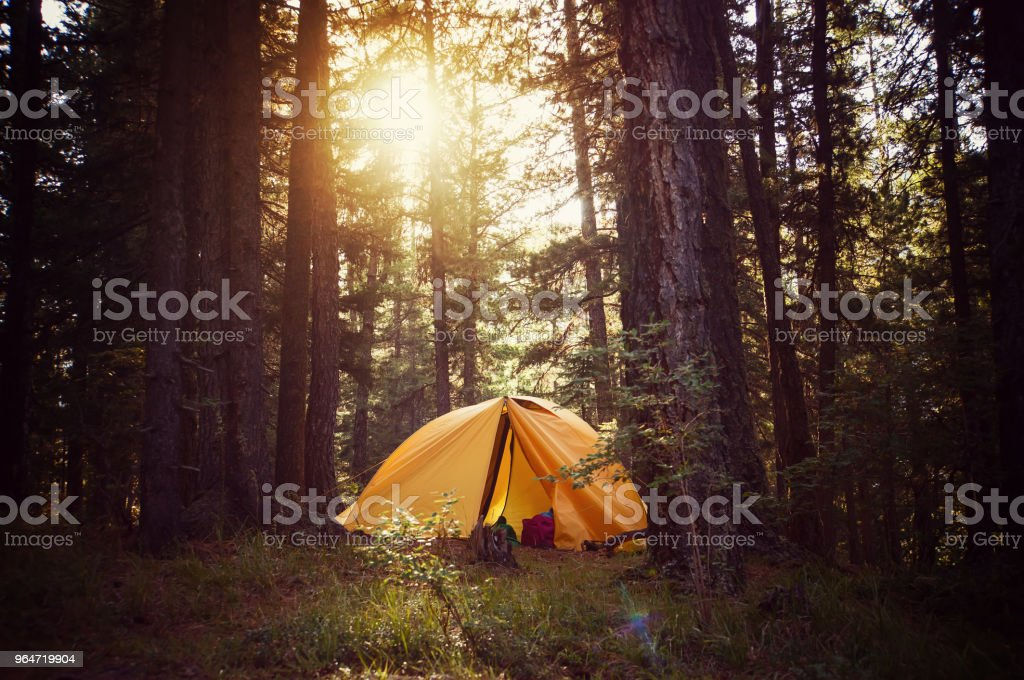 View of tent on meadow in forest at sunrise. royalty-free stock photo