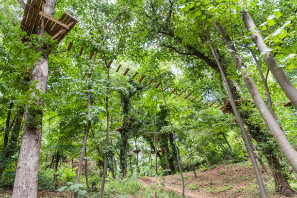 View of the adventure park with obstacles on the trees. stock photo
