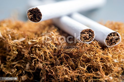 View of the cigarettes and tobacco stack. The tobacco plant is part of the genus nicotiana and of the solanaceae (nightshade) family.
