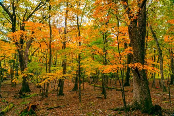 Blick auf das bunte Laub des Herbstwaldes – Foto