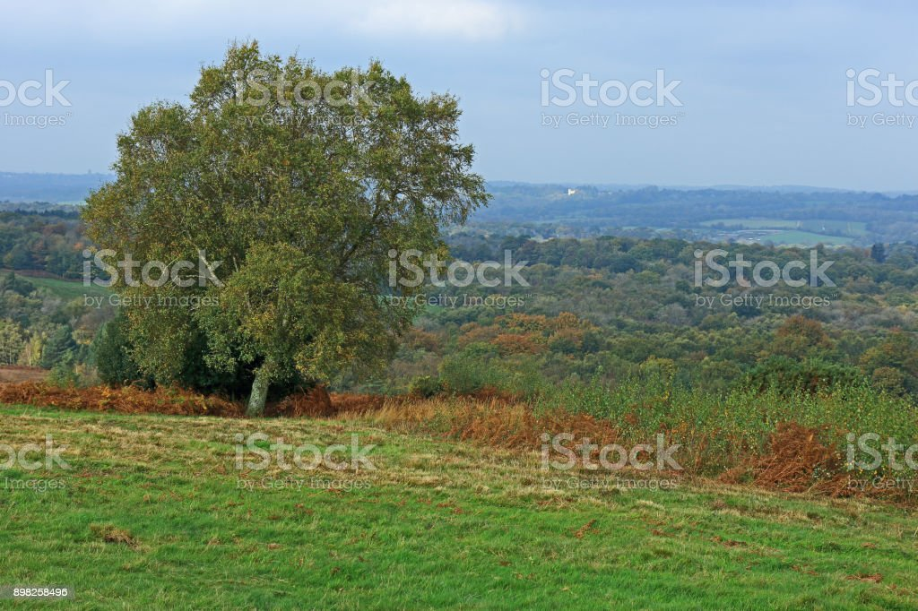 A view of the countryside in the Ashdown forest stock photo