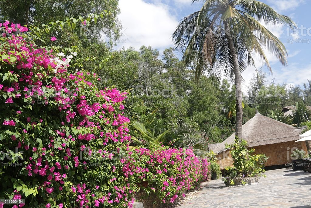 View of the garden at hotel in Vietnam stock photo