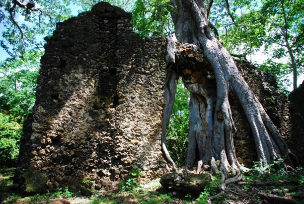 View of the Gedi Ruins, close to Mombasa, Kenya stock photo