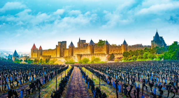 View of the medieval city of Carcassonne from a vineyard, France stock photo