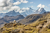 istock A view of the Peruvian Andes 871291640