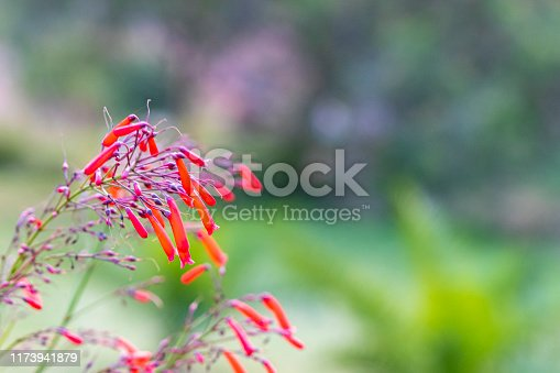 View of The Red Firecracker Fern totally out of focus