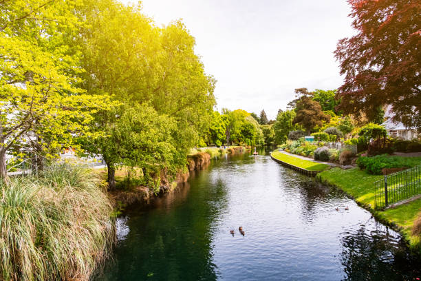 View of the river in Christchurch Botanic garden. View of the river in Christchurch Botanic garden. avon colorado stock pictures, royalty-free photos & images