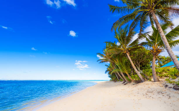 View of the sandy beach, Cook Islands, South Pacific. Copy space for text View of the sandy beach, Cook Islands, South Pacific. Copy space for text. south pacific ocean stock pictures, royalty-free photos & images
