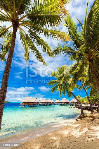 View of the sandy beach with palm trees, Bora Bora, French Polynesia. Vertical.