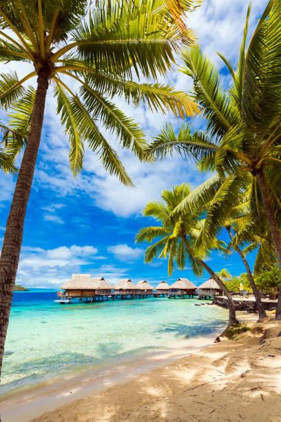 Blick auf den Sandstrand mit Palmen, Bora Bora, Französisch-Polynesien. senkrecht – Foto