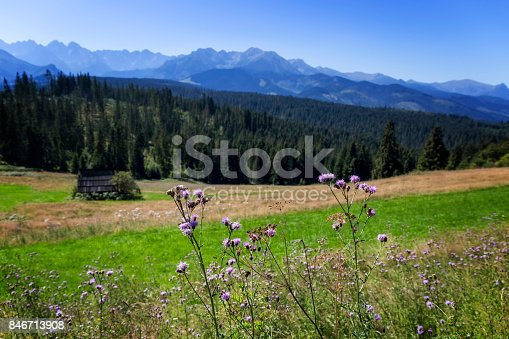 1130859000 istock photo View of the Scotch thistle flowers and Tatra Mountains, Poland 846713908