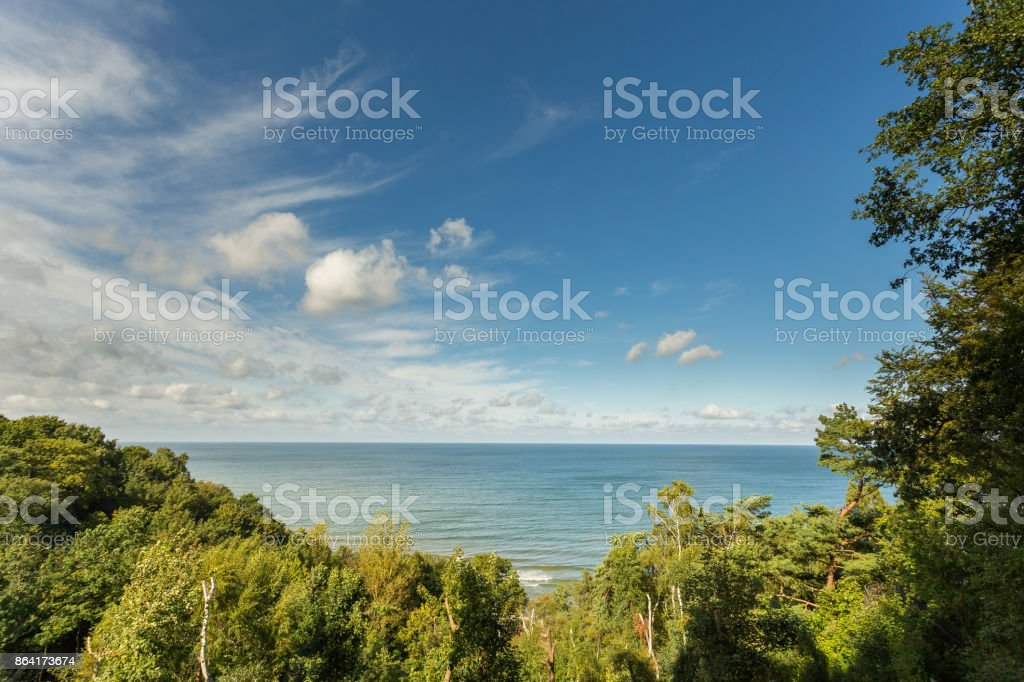 view of the sea through the trees royalty-free stock photo
