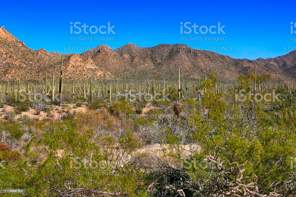View of the Sonora desert just outside Tucson in Arizona stock photo
