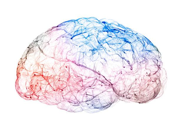 vista de las sinapsis. conexiones cerebrales. neuronas y sinapsis. comunicación y estímulo cerebral - brain fotografías e imágenes de stock
