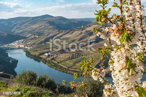 View of the terraced vineyards in the Douro Valley and river near the village of Pinhao, Portugal. Concept for travel in Portugal and most beautiful places in Portugal