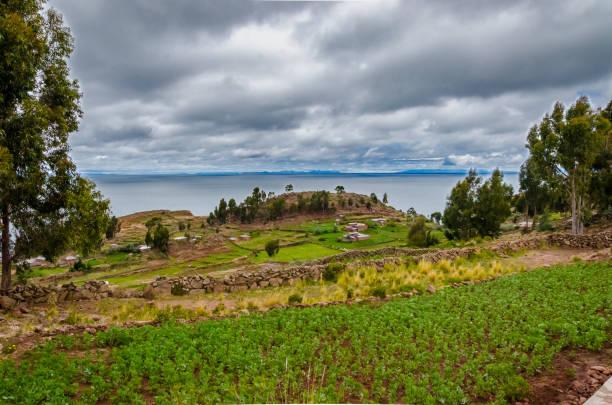 チチカカ湖とタキーレ島のプランテーションの眺め - タキーレ島 ストックフォトと画像