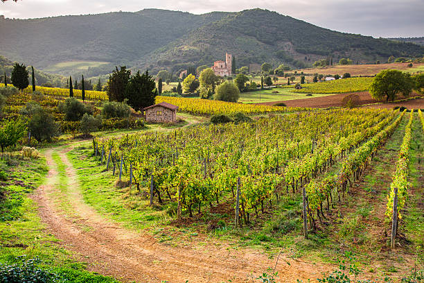 View of the vineyards and the church in Tuscany stock photo