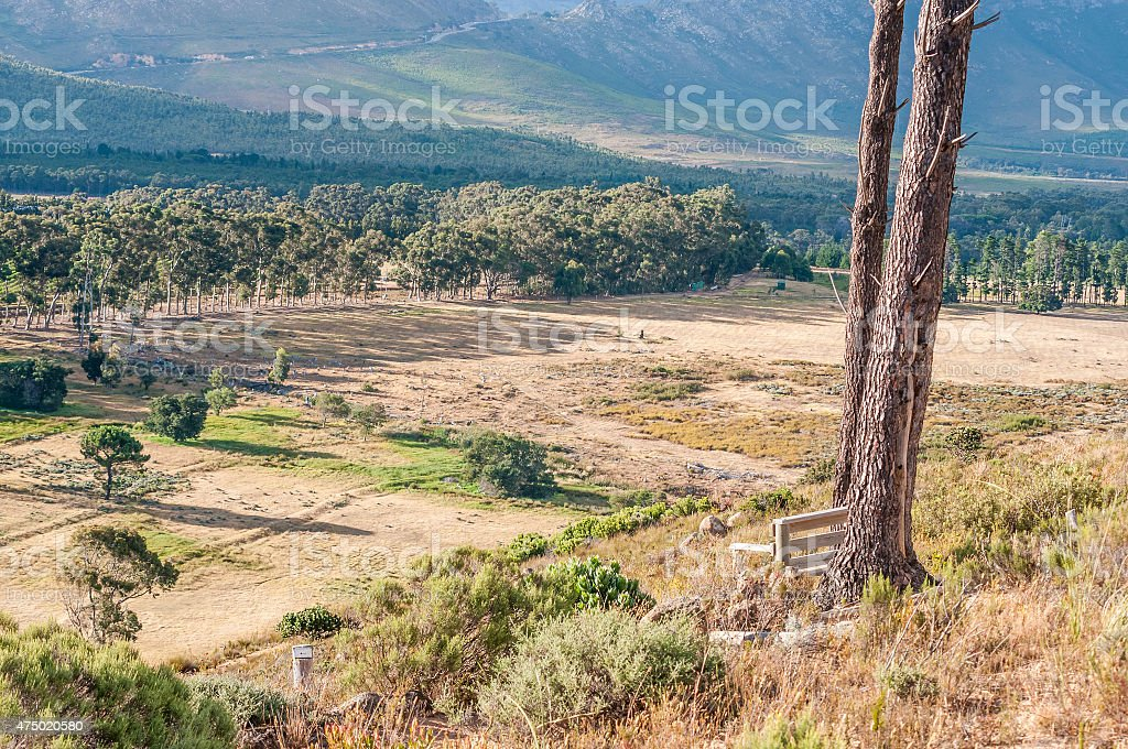 View of the wildlife reserve on Wedderville Estate stock photo