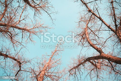 View of tree branches against the sky. Tree branches view from the ground.