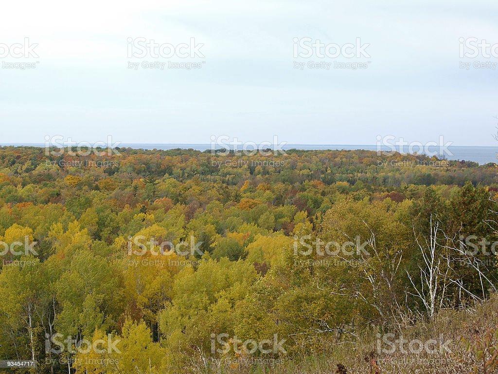 Luftbild von Bäumen im Herbst Lizenzfreies stock-foto