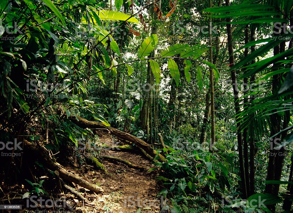 View of tropical rain forest stock photo