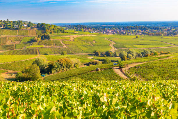 View of vineyards, in Burgundy, France stock photo