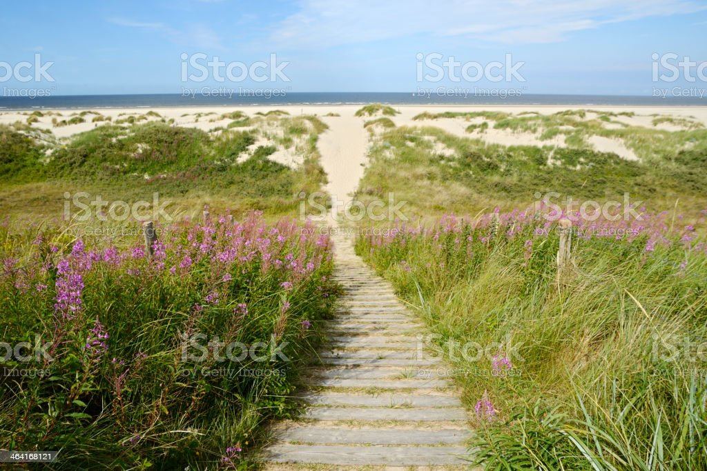 View of Wangerooge Beach with fireweed and footpath stock photo