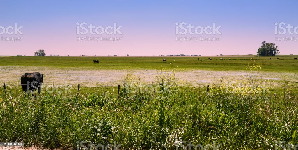 View of wet pampas in Areco stock photo