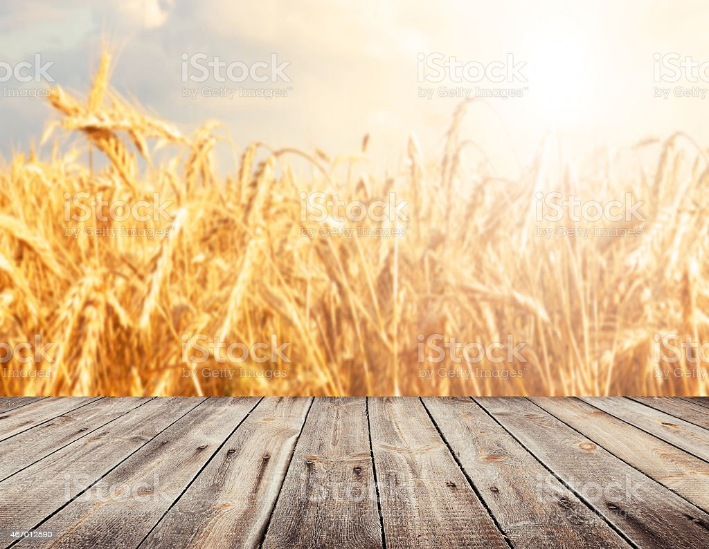 View of wheat fields from wooden surface stock photo
