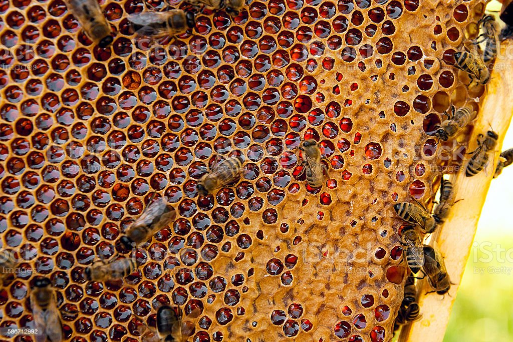 View of working bees on the honeycomb with sweet honey. stock photo