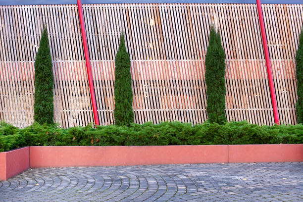 View of young conifer trees growing in a row stock photo