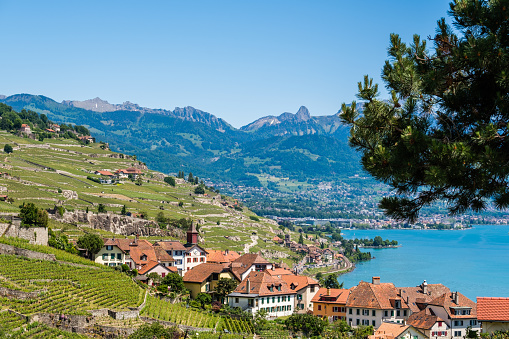 View on a little winery village called Rivaz in the famous Lavaux winery area., Switzerland