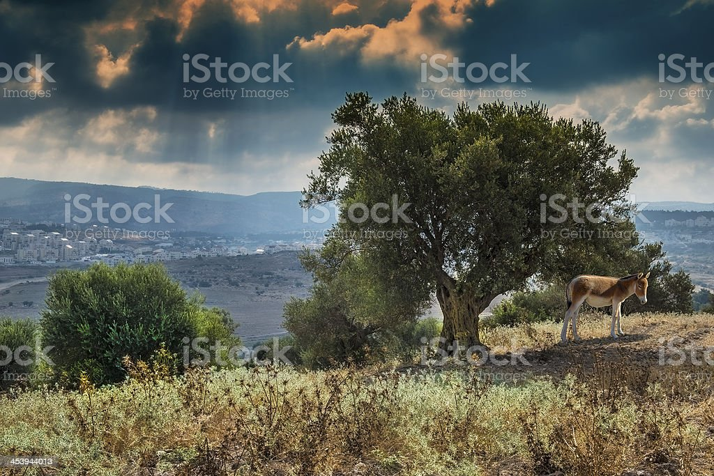 View on Bet-Shemesh city from olive grove royalty-free stock photo