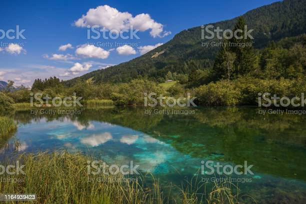 View on bright green clear river summer in mountain forest in sunlight Zelenci Slovenia