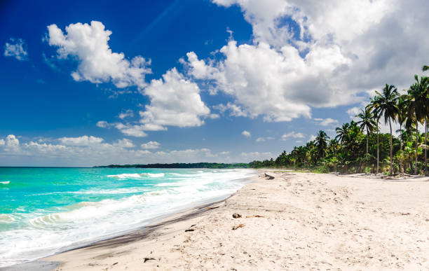 View on Caribbean tropical beach by Palomino in Colombia Caribbean tropical beach by Palomino in Colombia palomino stock pictures, royalty-free photos & images