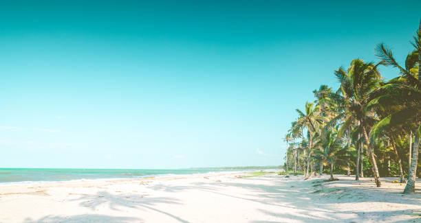 View on Caribbean tropical beach by Palomino in Colombia View on Caribbean tropical beach by Palomino in Colombia palomino stock pictures, royalty-free photos & images