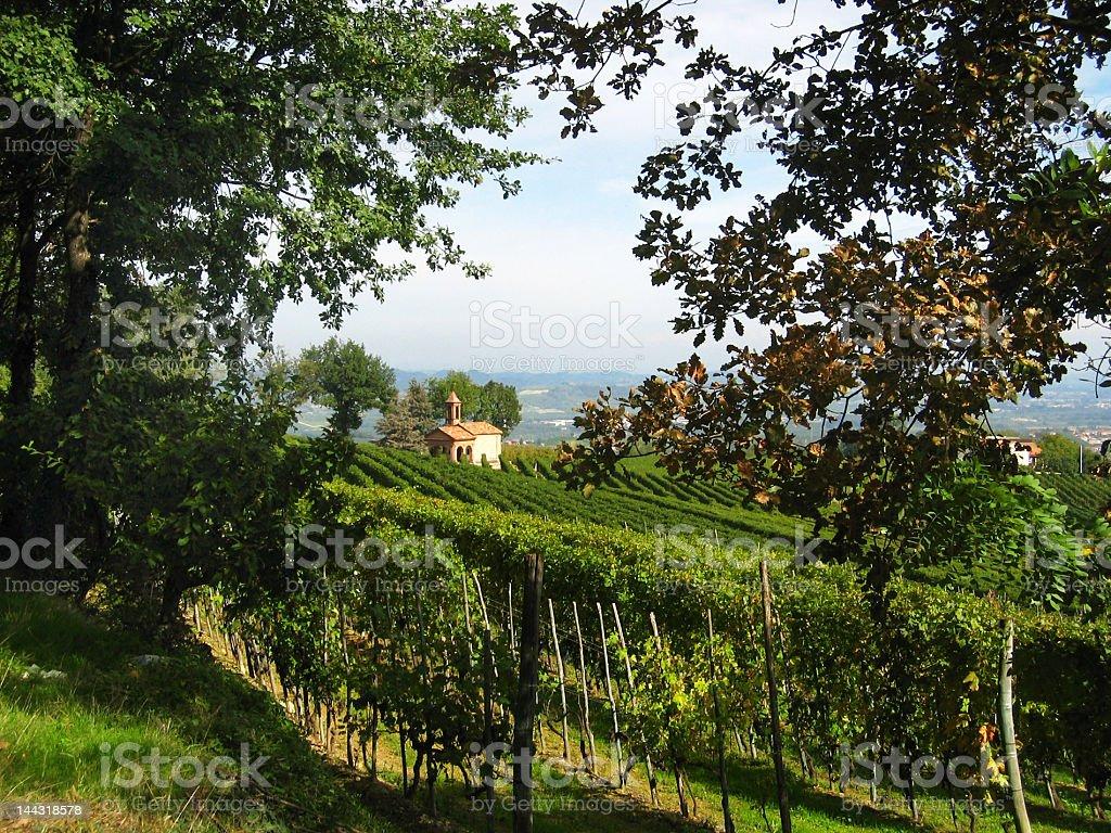 view on italian vineyards royalty-free stock photo