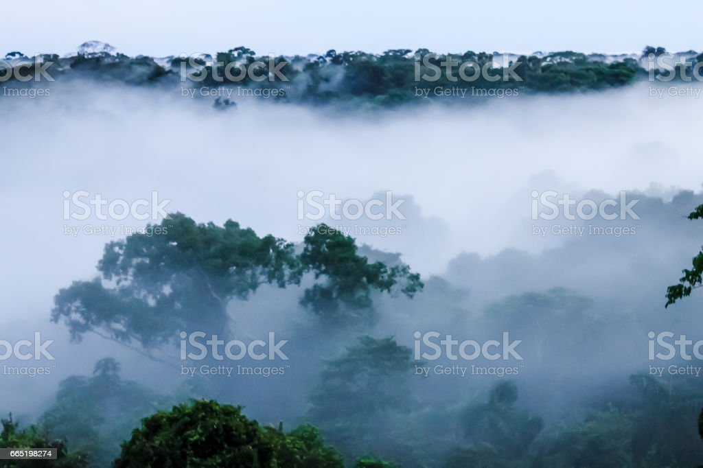 View on morning fog in the brazilian rainforest by Javari river stock photo