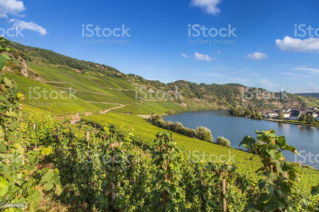 view on Moselle and vineyards  in Germany Piesport Lizenzfreies stock-foto